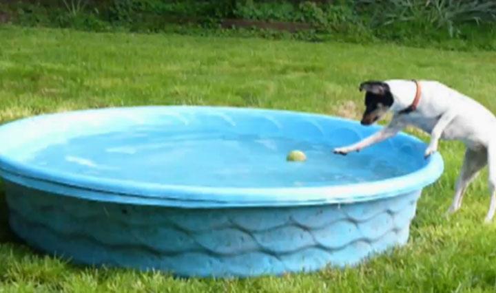 Der Hund und der Ball im Pool