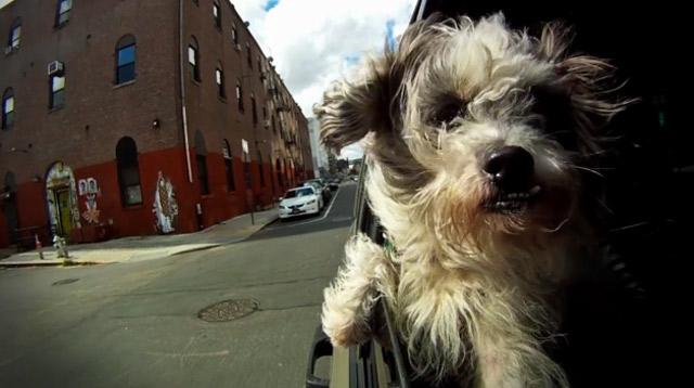 Slowmotion: Hundeköpfe aus dem Autofenster