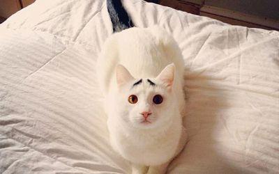 eyebrow_cat_01