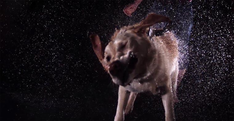 Slowmotion: nasse Tiere schütteln ihr Fell