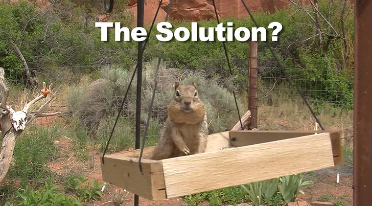 Vaseline gegen stehlendes Eichhörnchen