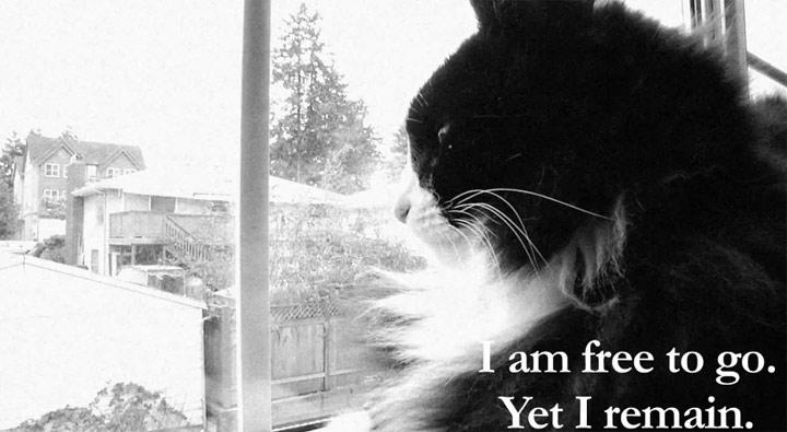 Tag einer Katze als French Art Movie