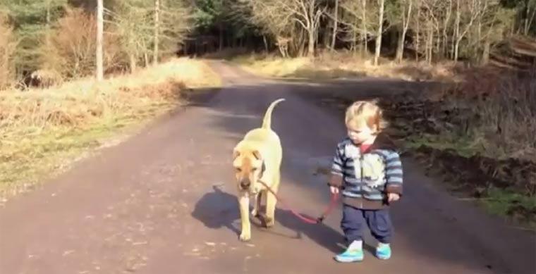 Der Hund, das Kleinkind und die Pfütze