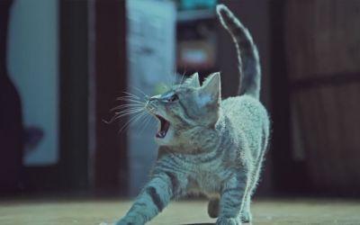 kittens_on_the_beat