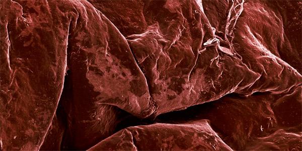 Essen unterm Elektronen-Mikroskop: Magnifood