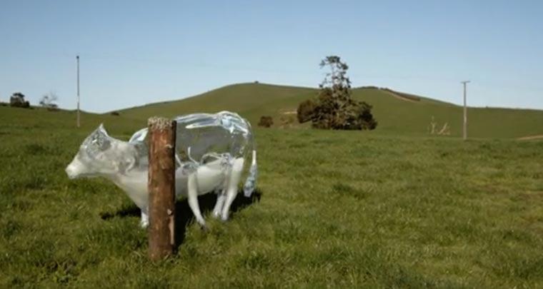 Von Glaskühen und Milchreitern