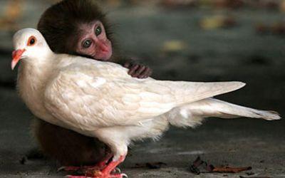 monkeydove