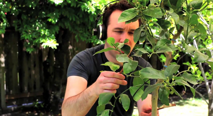 Soundsampling: Music from Nature