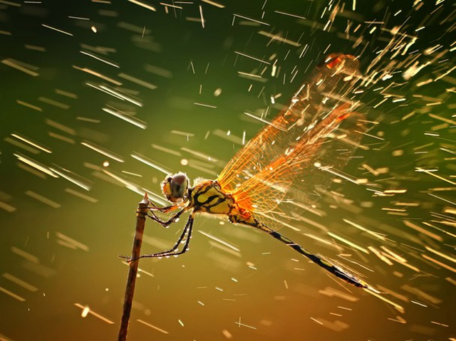 Gewinner des National Geographic Photo Contest 2011