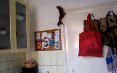 ninja_squirrel