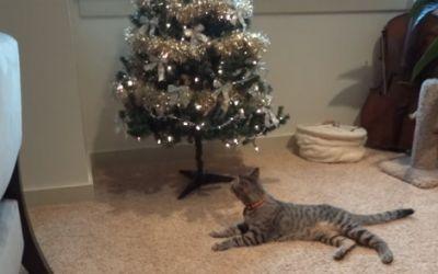 oscar_christmas_Tree