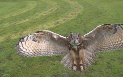 owlmotion