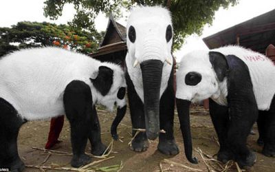 panda-elephants