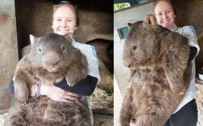 patrick-wombat_01