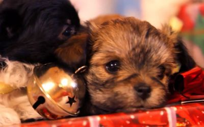 puppy_christmas