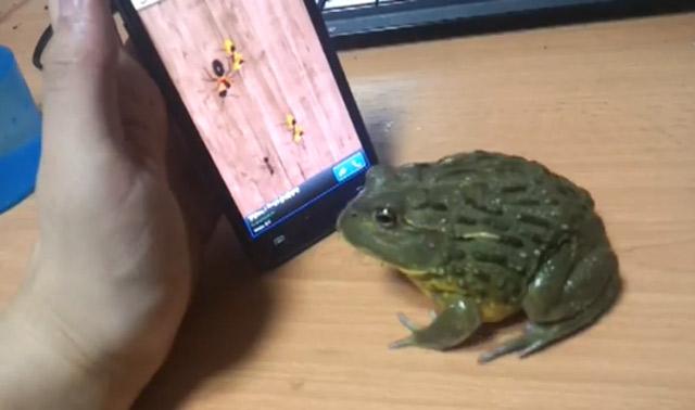 Kröte spielt auf dem Smartphone