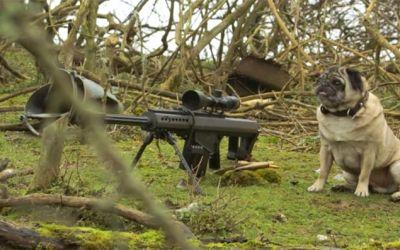 sniper_pug