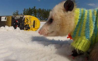 snowboarding_oppossum