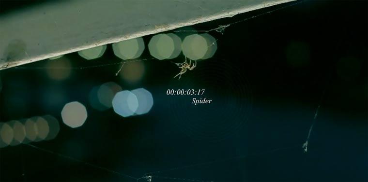 Spinnennestbau schön-schaurig: Spider