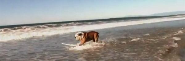 Der surfende Hund