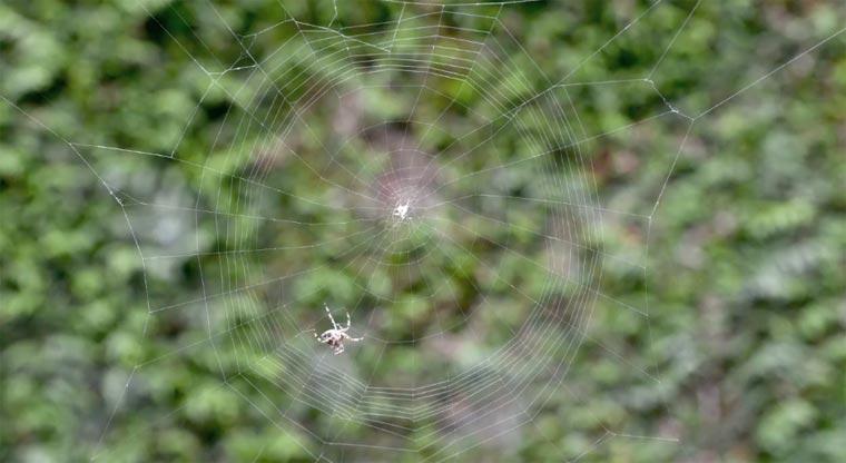 Timelapse: Eine Spinne erstellt ihr Netz