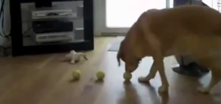 Hundecontent: Tripple Apportierung