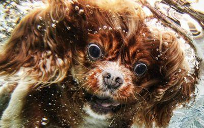 underwater_dogs_01