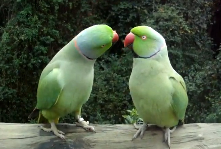 Unterhaltung zwischen Vögeln