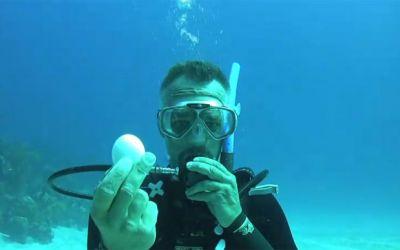 unterwasser-ei