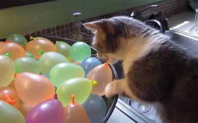 wasserballonkatze