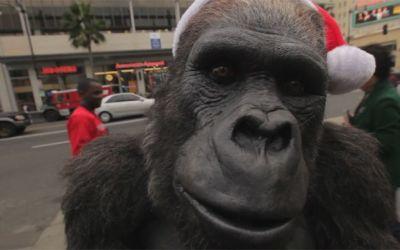 zookeeper_gorilla