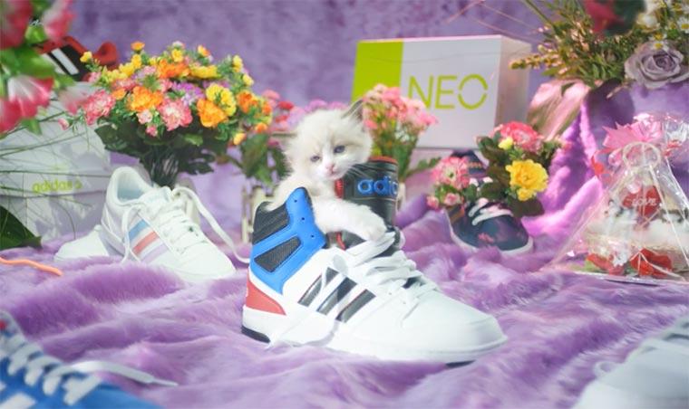 Sneakers und Katzen