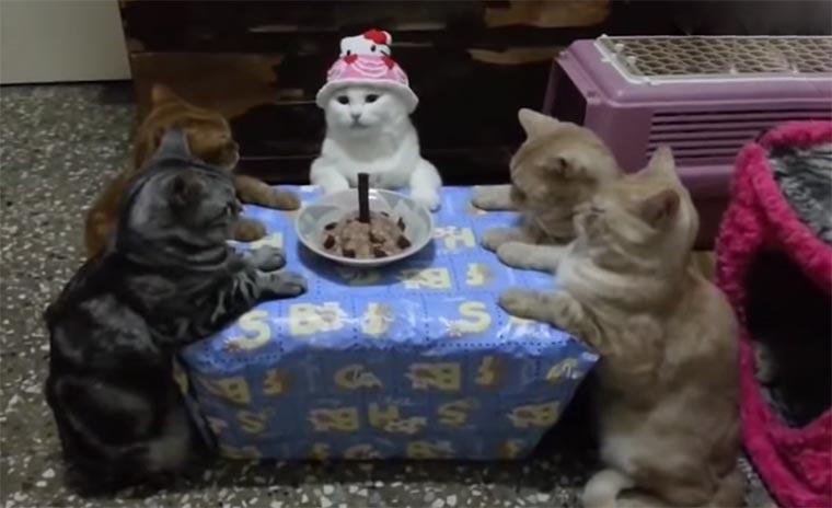 Ich mach heute nichts, dafür bekommt ihr Katzen, die Geburtstage hassen! cats-hate-birthdays