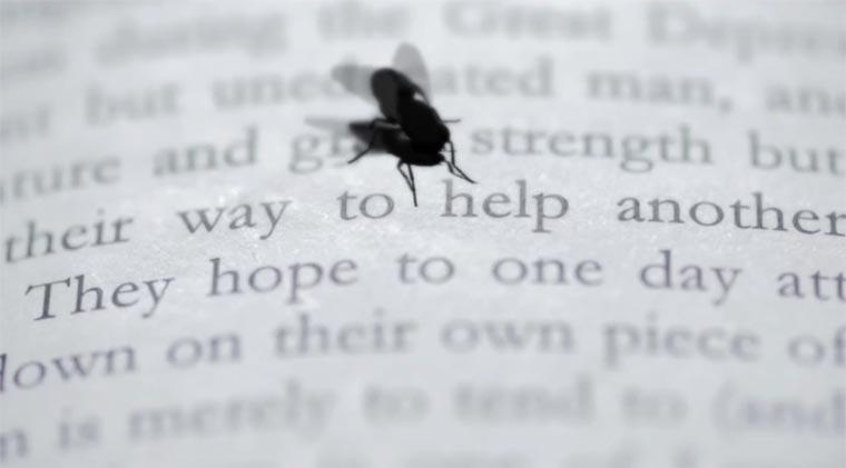 Wenn eine Fliege zu dir spricht Musca