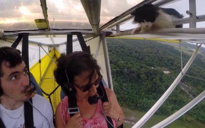 cat-flight