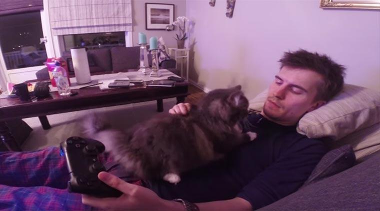 Katze stört beim Zocken cat-video-games