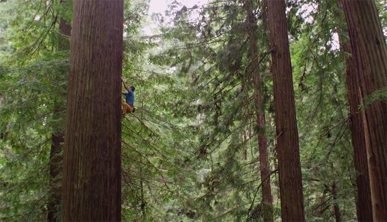 Die welthöchsten Bäume hochklettern redwood-climbing