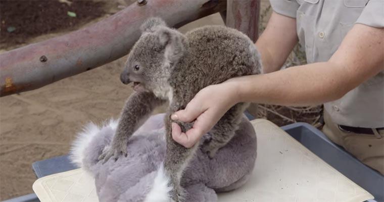 Koala-Baby-Wiegen