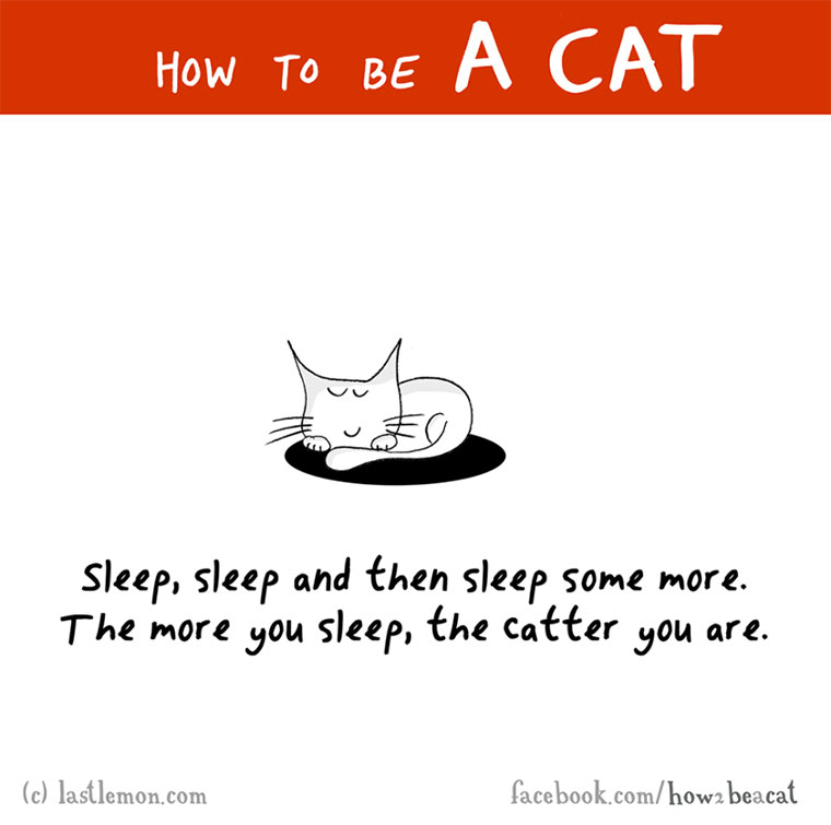 How To Be A Cat how-to-be-a-cat_02