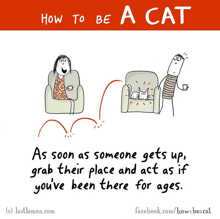 How To Be A Cat how-to-be-a-cat_08