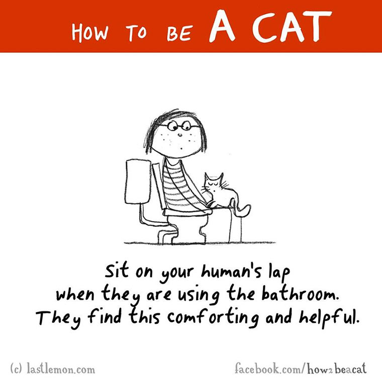 How To Be A Cat how-to-be-a-cat_09
