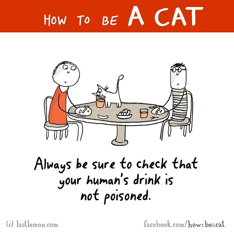 How To Be A Cat how-to-be-a-cat_10