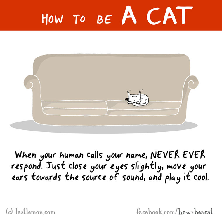 How To Be A Cat how-to-be-a-cat_12
