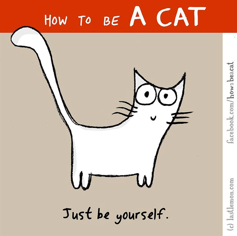 How To Be A Cat how-to-be-a-cat_13