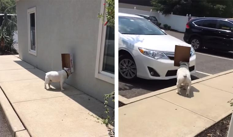 Ein Hund und sein Karton gegen den Rest der Welt Dog-Box