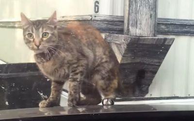 Katzen-Scheibenwischer