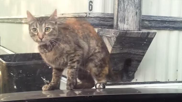 Katzen vs. Scheibenwischer Katzen-Scheibenwischer
