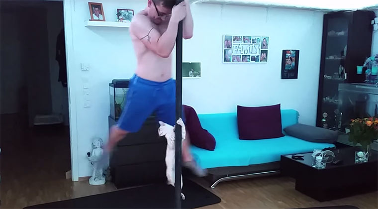 Pole Dancing mit Katze cat-pole-dance