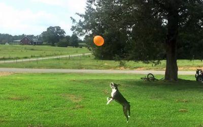 dog-balloon