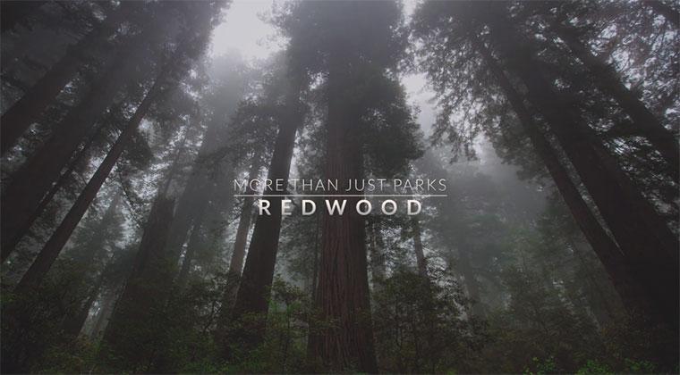 Die gigantische Schönheit der weltgrößten Bäume MTJP_Redwood